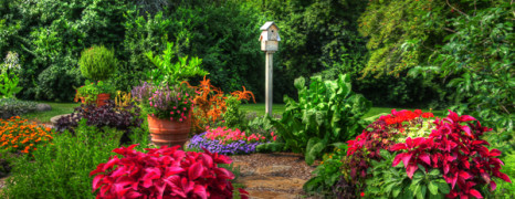 Great Gardens Grow in Rockford